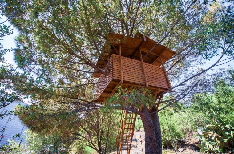 Kids will surely enjoy the beautiful treehouse