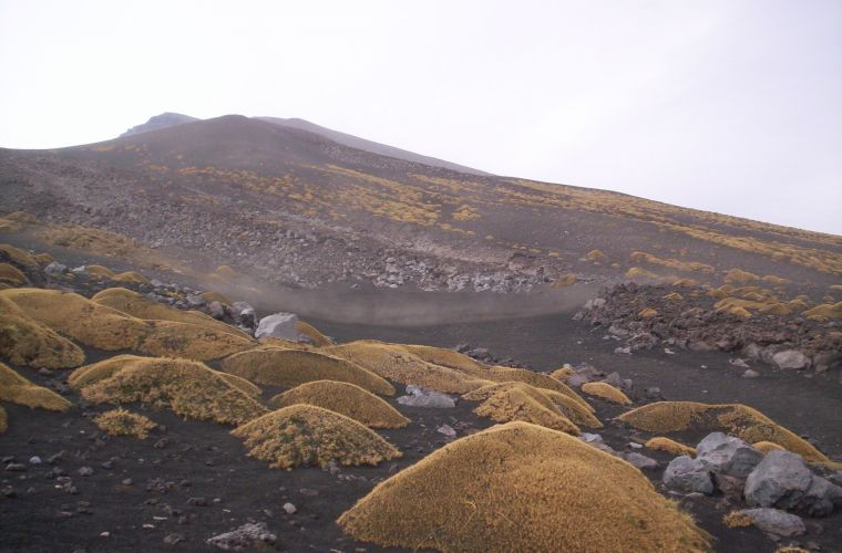 The Astragalo paints the lava desert