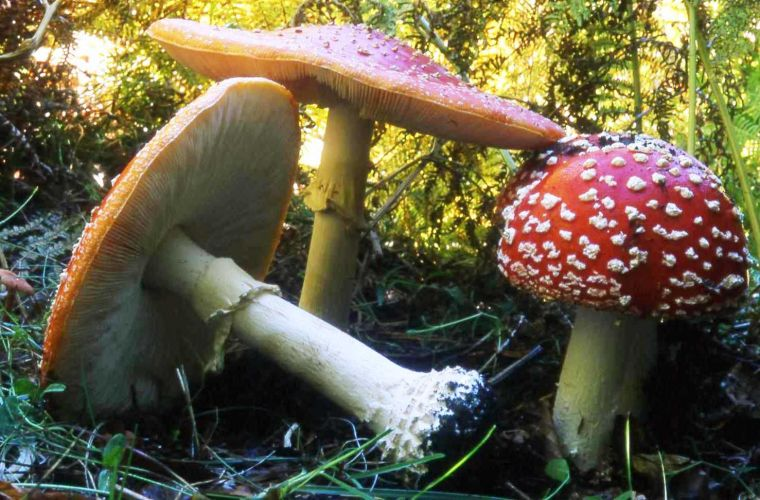 You can find many varietes of mushroom in Etna forest