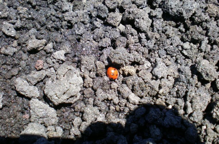 Ladybug at the top