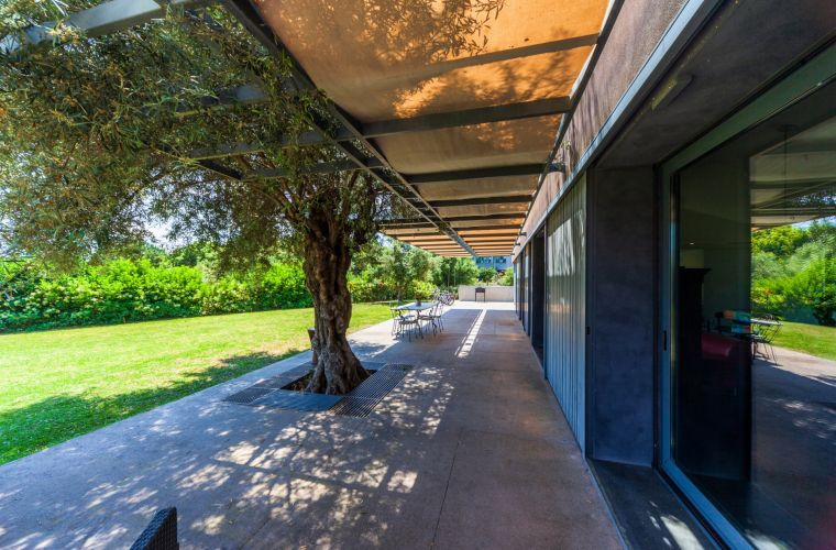 Long patio with olive tree