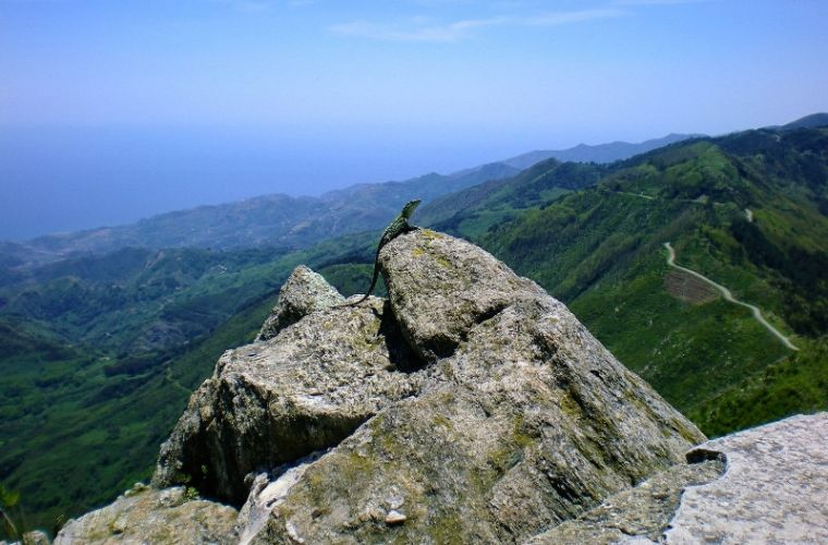 Lizard enjoying the view from the top of Antennamare