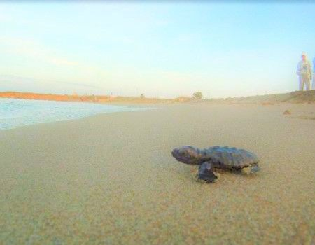 For the baby Caretta is time to discover the world (picture taken from the garden of the house)